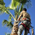 Palm tree removal on the Costa Blanca - Torrevieja Forums